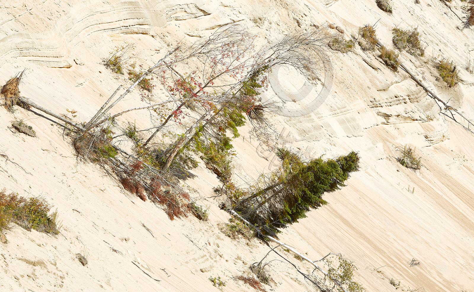 ARROWHEAD-SAND-DUNES