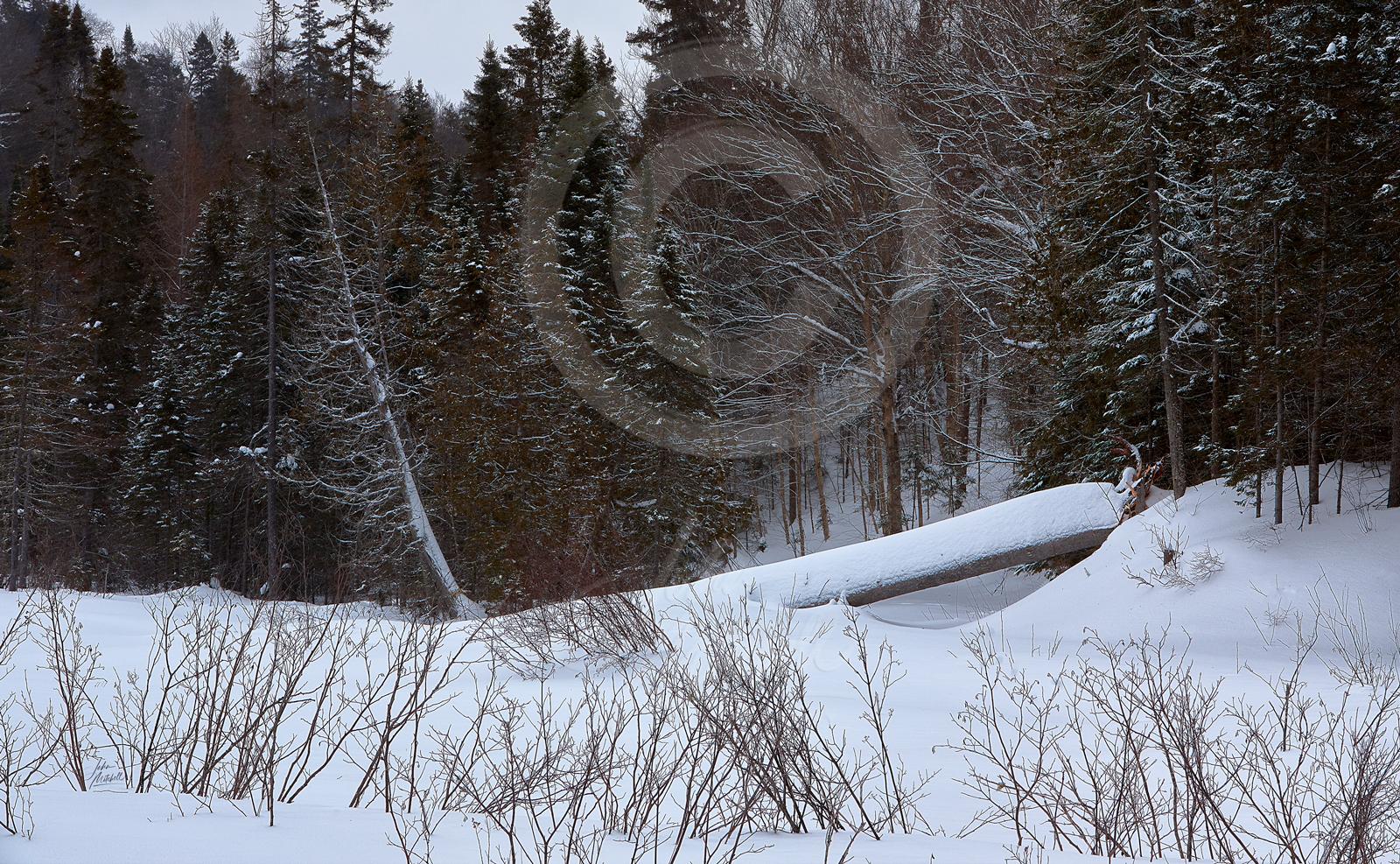 Algonquin-Winter0087