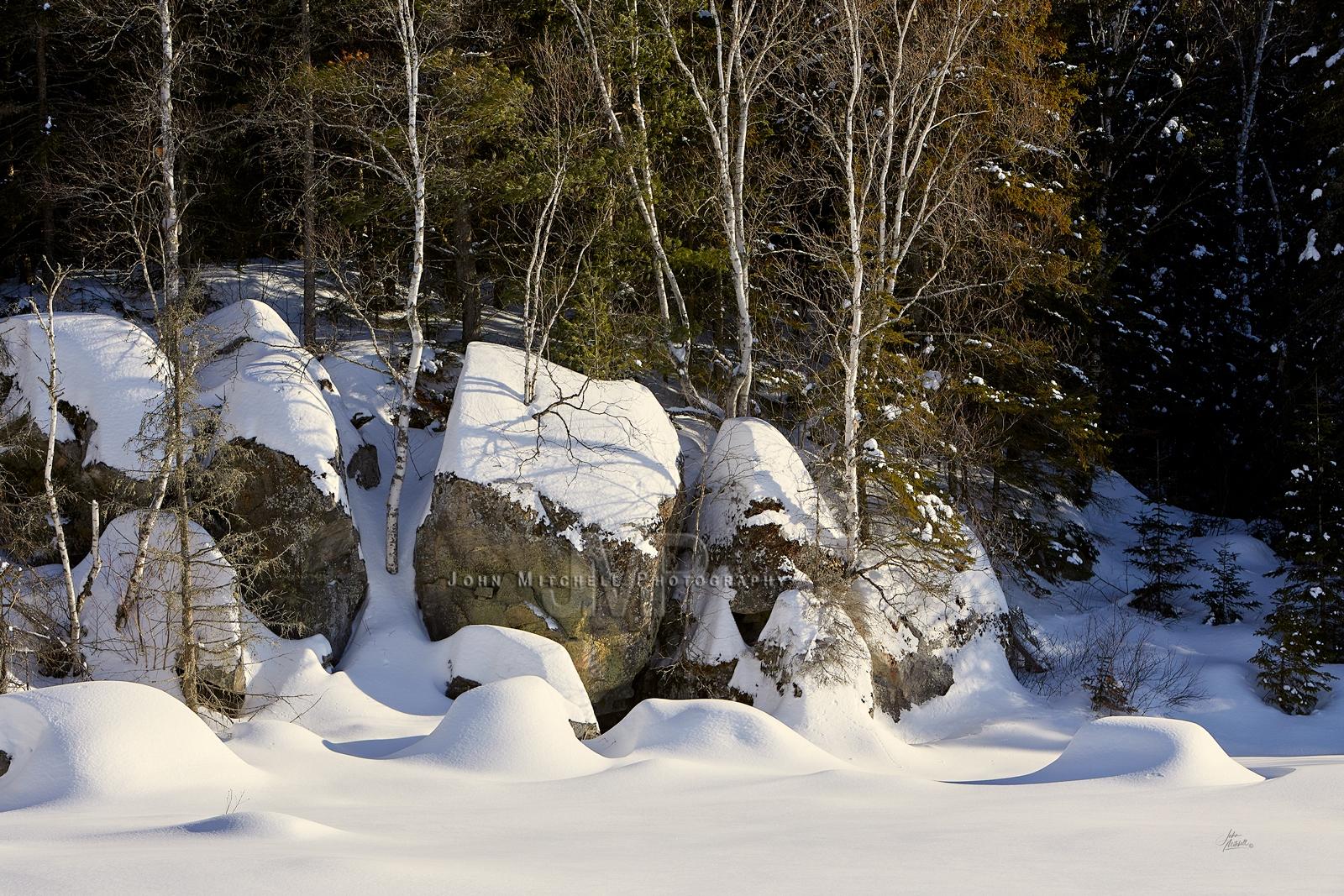White-Birch_White-Snow