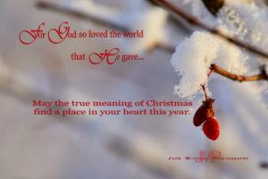 Merry Christmas …'Tis the Season