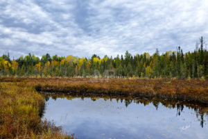 Spruce Bog, Algonquin Park